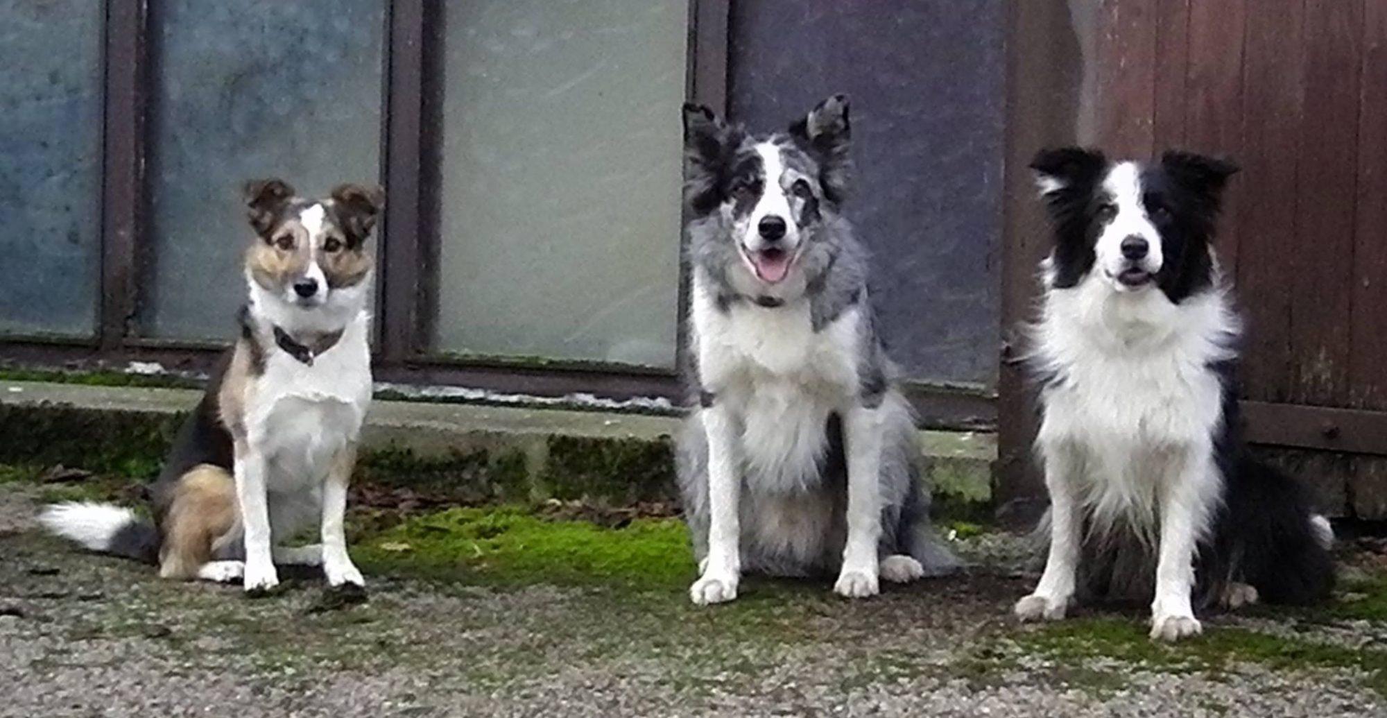 Aberdeen Canine Training Society